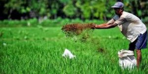 Peranan Pembangunan Sektor Pertanian Saat Ini